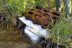 swamp2007_06